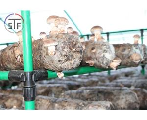 外包蘑菇架